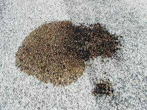 Remove Oil Floor